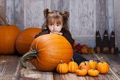 stock photo of gourds  - Adorable toddler surrounded by giant pumpkins - JPG