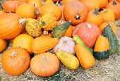 picture of gourds  - giant bumpy gourd and pumpkin at the market place - JPG
