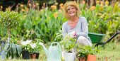 image of grandmother  - Happy grandmother gardening on a sunny day - JPG