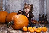 foto of gourds  - Adorable toddler with giant pumpkins - JPG