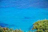 image of shoreline  - plants by Capo Testa shoreline in Sardinia - JPG