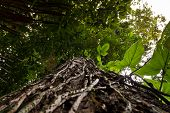 image of rainforest  - Low angle view of a tree in amazon rainforest - JPG