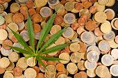 pic of cannabis  - Picture of Marijuana and Money Cannabis Business Concept - JPG