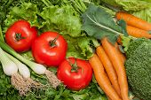 foto of farmers market vegetables  - Collection of fresh vegetables from the farmers - JPG