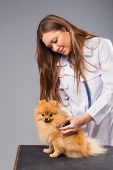 pic of pomeranian  - Smiling female vet with phonendoscope holding cute pomeranian dog - JPG