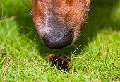 Curious Dog Sniffing Furry Worm Closeup poster
