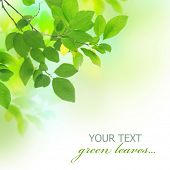 stock photo of green leaves  - Beautiful Fresh Green Leaves - JPG