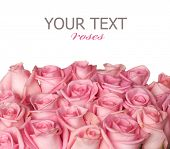 stock photo of pink rose  - Pink Roses Border - JPG