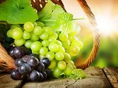 stock photo of tendril  - Grapes in the basket - JPG