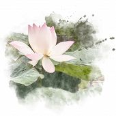 Watercolor Painting (retouch) Illustration Of Blossom Pink Lotus. Artistic Floral Abstract Backgroun poster