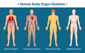 Human Body Internal Organs Circulatory Nervous And Skeletal Systems Anatomy And Physiology Flat Educ poster