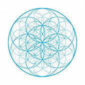 Vector Sacred Geometry Illustration: Flower Of Life, Also Known As Seed Of Life Or The Pattern Of Cr poster