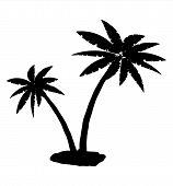 Tropical Palm Silhouette. Jungle Leaves Set. Coconut Palm, Monstera, Fan Palm, Rhapis, Banana Tree.  poster