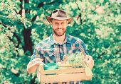 Gardening Expert Tips. Garden Care. Mature Farmer Man Planting Plants. Planting Season. Bearded Gard poster
