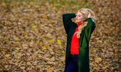 Girl Fashionable Blonde Walk In Autumn Park. Long Hair Care Concept. Cold Blonde Color Concept. How  poster