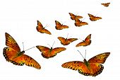 picture of swarm  - Swarm of orange butterflies isolated on white background - JPG