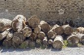 Logging. Cut Logs Lie On The Ground In The Mountains By The Stone Wall Close-up On An Summer, Sunny  poster