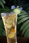 foto of borage  - Closeup of glass of ginger and cucumber iced tea garnished with borage flowers on a table in a restaurant on a tropical beach - JPG