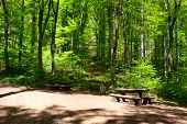 stock photo of centenarian  - Landscape Place To Rest In The Forest - JPG