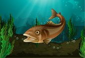 picture of fish pond  - Freshwater fish in underwater habitat - JPG