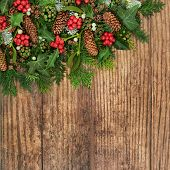 Winter flora rustic wood background with holly, snow covered fir, mistletoe, pine cones, ivy and ced poster