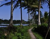 stock photo of tree lined street  - View of coconut trees lined and dirt path under blue sky background - JPG