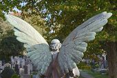 picture of graveyard  - Angel in a Wooded Cemetery Overlooking Graveyard - JPG
