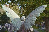 picture of graveyard  - Angel in a Wooded Cemetery Overlooking Graveyard - JPG