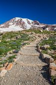 Hiking Trail To Mount Rainier