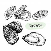 stock photo of oyster shell  - Oysters - JPG