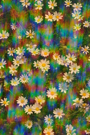 picture of prism  - Daisy flowers on a sunny spring day - JPG