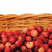 pic of bearberry  - Fresh mountain cranberries isolated Vaccinium vitis-idaea cowberry basket large detailed Rhodococcum 