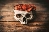 image of mystique  - Skull and roses on a wood table