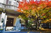image of kanto  - Kyoto University at fall for adv or others purpose use - JPG