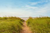 image of dune grass  - Sand path over dunes with beach grass  - JPG