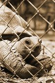 stock photo of tortoise  - Tortoise trapped in a cage and tortoise crawling