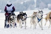 picture of sled-dog  - Group of sled dogs running through lonely winter landscape - JPG