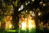 picture of mystique  - Mysterious Deep Jungle in the Sunset - JPG