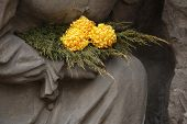 pic of bohemia  - Yellow chrysanthemum at the Josefov Garrison Cemetery in Jaromer - JPG