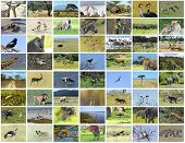 picture of african animals  - Collage of African animals in the parks of Kenya - JPG
