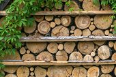 picture of firewood  - pattern of firewoods stack closeup - JPG