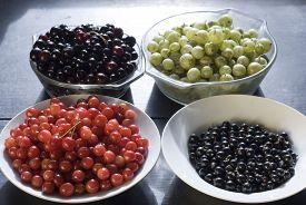 stock photo of black-cherry  - A bowl of black currants - JPG