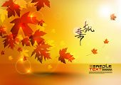 image of fall leaves  - Maple Leaves - JPG