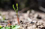 A Tiny Green Plant Growing Up From Earth poster