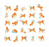 Collection Of Dog Performing Everyday Activities On White Background. Bundle Of Cute Japanese Shiba  poster