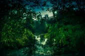 Landscape Of Sky With Sunbeams Over Serenity Nature In Forest. Tranquil River And Bamboo Trees At Na poster