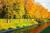 Fall Trees Along The City Channel In Fall Sunny Weather. Fall Landscape.fall Landscape Scene. Fall T poster