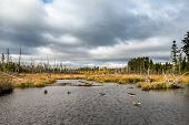 Small Pond In The Maine North Woods On Overcast Fall Day poster