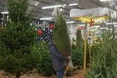A Man Carries A Christmas Tree Packed In A Plastic Net Douglas Fir poster