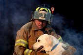 Firefighter And Dog